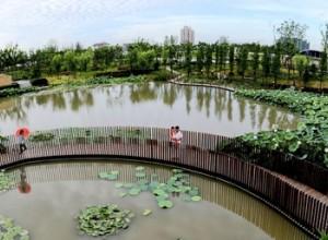菊园北水湾景观绿地建设项目招标公告