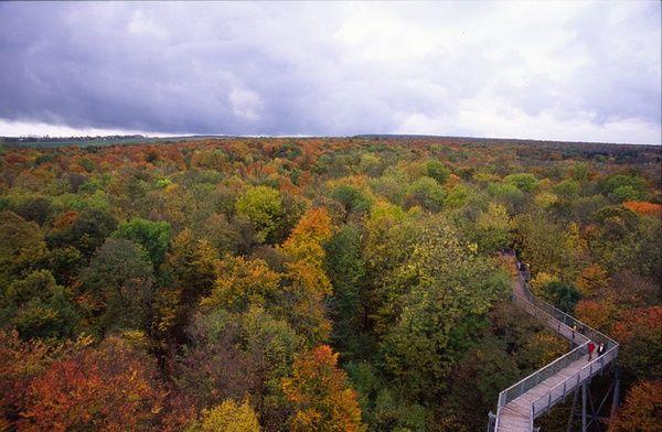 中世纪时期德国最大的自然公园森林_国外名胜_风景
