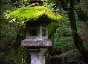 有了它,日式庭院,活了! (30)