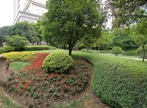 园林绿化植物养护管理方案汇总 (3)