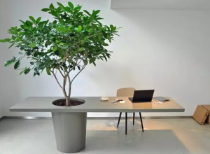 在办公室里种了一棵树,从此爱上了加班。 (36)