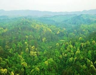 湿地补偿首次纳入四川省林业补助管理