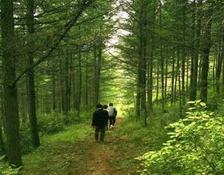 森林对我们的意义越来越大