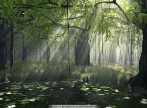 """北大:水分对森林高度有""""负效应"""""""