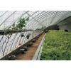 花卉大棚温室大棚骨架及保温被