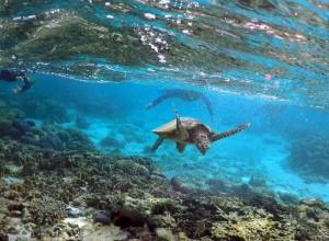 澳洲大堡礁-Great Barrier Reef Queensland