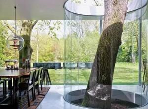 当你的房子里有一颗树 (30)
